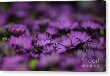 Purple Mood Canvas Print by Eva Lechner