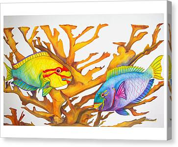 Queen Parrotfish And Elkhorn Coral Canvas Print by Brenda Tucker