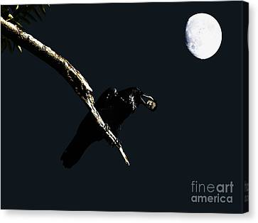 Quoth The Raven Nevermore Canvas Print by Wingsdomain Art and Photography