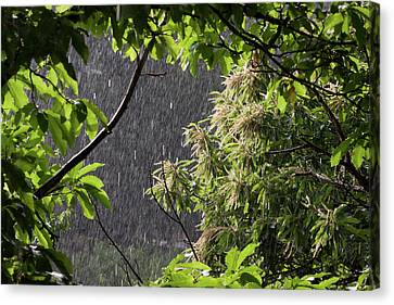 Rain Canvas Print by Bruno Spagnolo