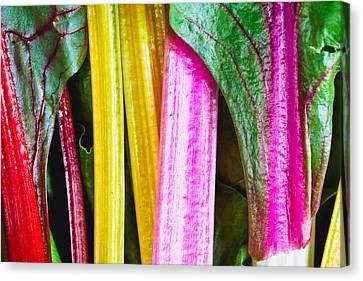 Rainbow Chard Canvas Print by Tom Gowanlock