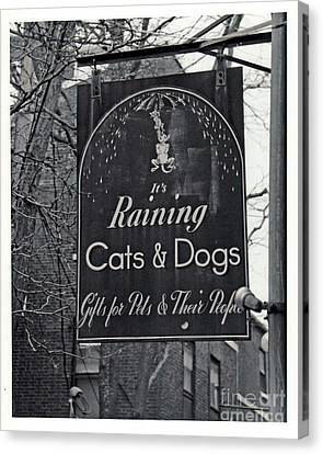 Canvas Print featuring the photograph Raining Cats And Dogs by Juls Adams
