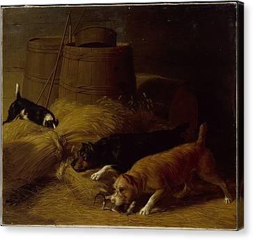 Rats Amongst The Barley Sheaves Canvas Print by Thomas Hewes Hinckley