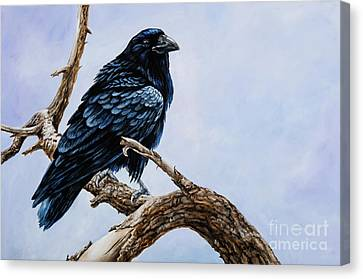 Raven Canvas Print by Igor Postash
