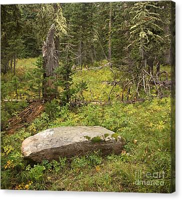 Rebirth In Montana Forest Canvas Print