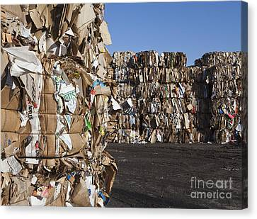 Cardboard Canvas Print - Recycling Facility by Paul Edmondson
