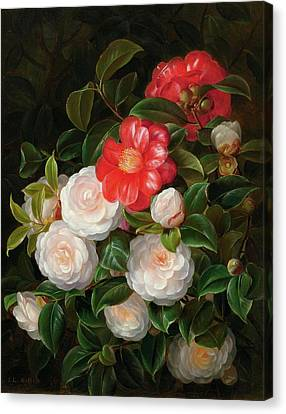 Camellia Canvas Print - Red And White Camellias by Johan Laurentz
