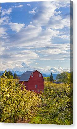 Canvas Print featuring the photograph Red Barn And Mt Hood by Patricia Davidson