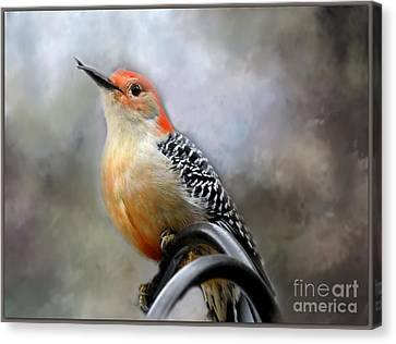 Red-bellied Woodpecker Canvas Print by Brenda Bostic