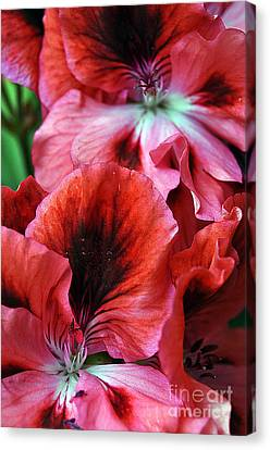 Clayton Canvas Print - Red Floral by Clayton Bruster