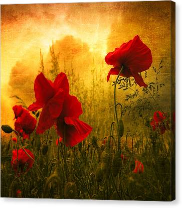 Red For Love Canvas Print by Philippe Sainte-Laudy
