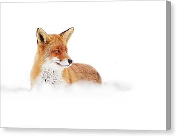 Wildlife Celebration Canvas Print - Red Fox In The White Snow by Roeselien Raimond