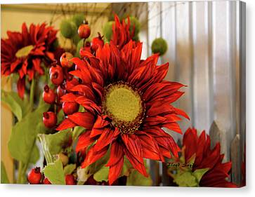 Red Sunflower Canvas Print by Floyd Snyder