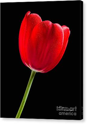 Canvas Print featuring the photograph Red Tulip No. 1  - By Flower Photographer David Perry Lawrence by David Perry Lawrence
