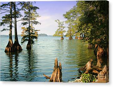 Canvas Print featuring the photograph Reelfoot Lake by Bonnie Willis