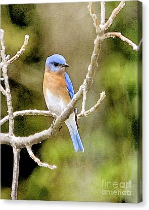 Canvas Print featuring the photograph Rhapsody In Blue by Betty LaRue