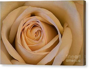 Canvas Print featuring the photograph Rose by Adrian LaRoque