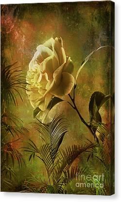 Rose Canvas Print by Andrzej Szczerski