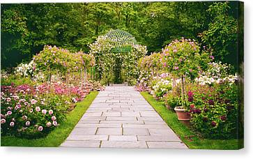 Rose Garden Walkway Canvas Print by Jessica Jenney