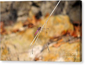Canvas Print featuring the photograph Fuchsia Fly by Al Powell Photography USA
