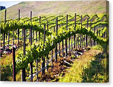 Rows Of Vines Canvas Print by Patricia Stalter