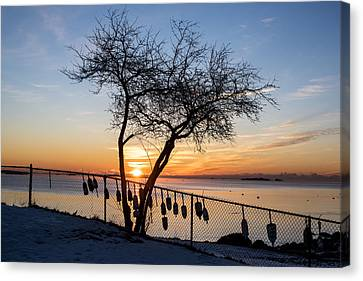 Salem Willows On An Icy Morning At Sunrise Canvas Print