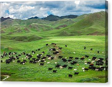 Farm Animal Canvas Print - Salt And Pepper Pasture by Todd Klassy
