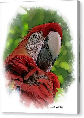 Scarlet Macaw Canvas Print by Larry Linton