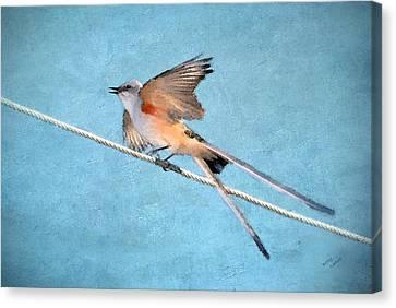 Scissor-tailed Flycatcher Canvas Print by Betty LaRue