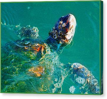Sea Turtle Canvas Print by W Gilroy