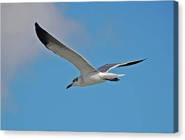 Canvas Print featuring the photograph 1- Seagull by Joseph Keane