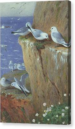 Seagulls Canvas Print by Archibald Thorburn