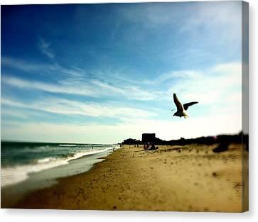 Seagulls At The Beach. Canvas Print by Carlos Avila