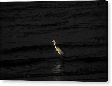 Seascape Gulf Coast, Ms F70v Canvas Print by Otri Park