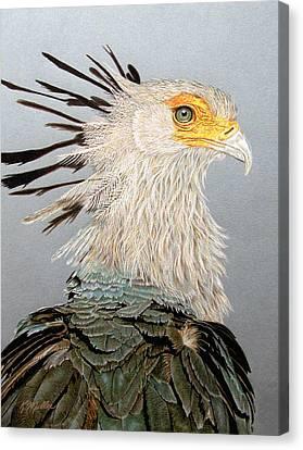 Secretary Bird Canvas Print by Kathie Miller