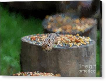 Seeds Always Better On The Other Log Canvas Print by Dan Friend