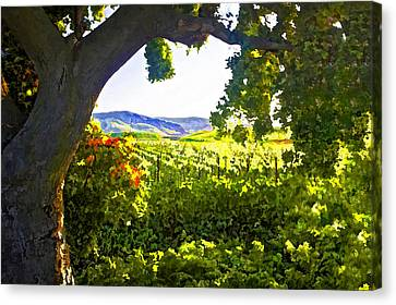 Shady Vineyard Canvas Print by Patricia Stalter