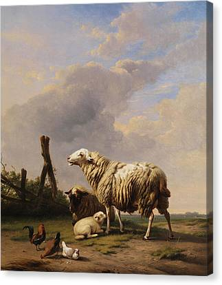 Sheep Canvas Print by Eugene Verboeckhoven