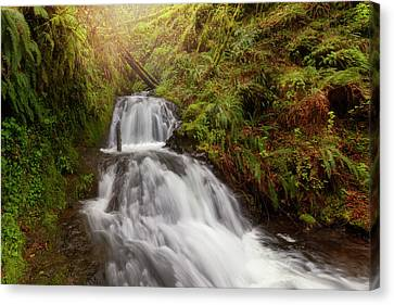 Shepperd's Dell Falls Canvas Print by David Gn