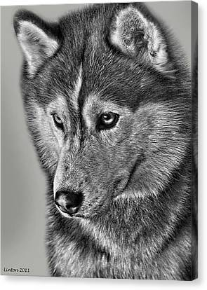 Siberian Husky 2 Canvas Print by Larry Linton
