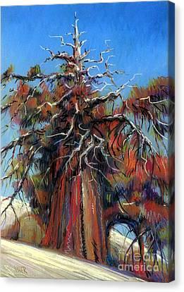 Sierra Juniper Canvas Print by Donald Maier