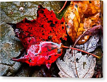 Canvas Print featuring the photograph Signs Of Autumn by Everett Houser