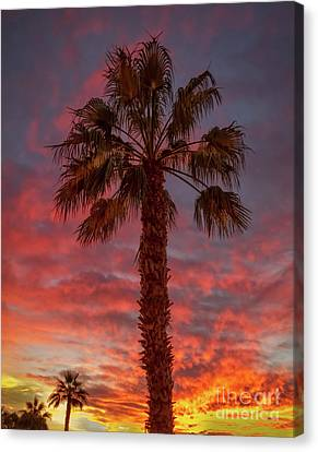 Silhouetted Palm Tree Canvas Print by Robert Bales