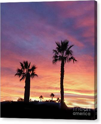 Silhouetted Palm Trees Canvas Print by Robert Bales
