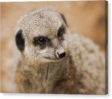 Canvas Print featuring the photograph Simples by Chris Boulton
