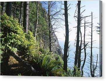 Sea Fern Canvas Print - Sinkyone Wilderness - The Lost Coast by Soli Deo Gloria Wilderness And Wildlife Photography