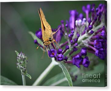 Canvas Print featuring the photograph Skipper by Douglas Stucky