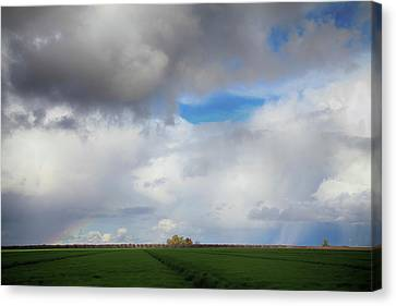 Skyward Canvas Print by Laurie Search