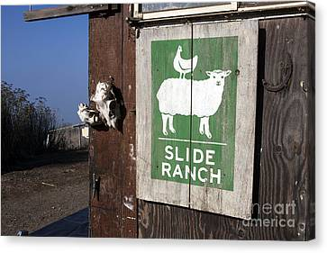 Slide Ranch, Golden Gate National Recreation Area Canvas Print