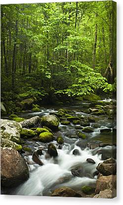 Smoky Mountain Stream Canvas Print by Andrew Soundarajan